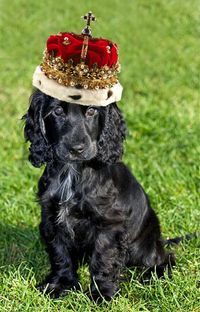Lupo the royal puppy